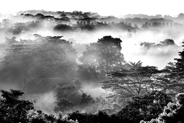 David Wirawan– 'Choa Chu Kang View'