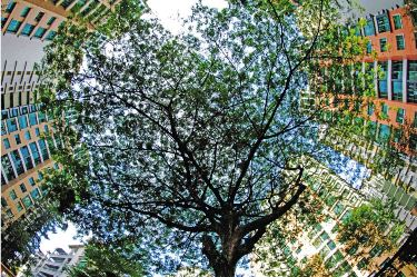 Hong Yew Kwong– 'Tree In Our Living Area